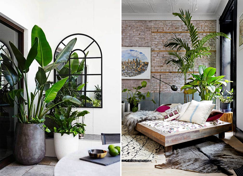 INDOOR PLANT INSPIRATION 7